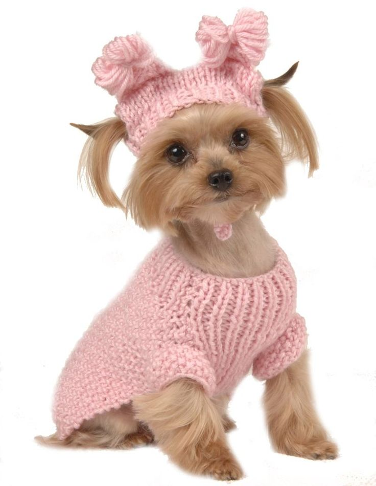 How the dog clothes came into existence?