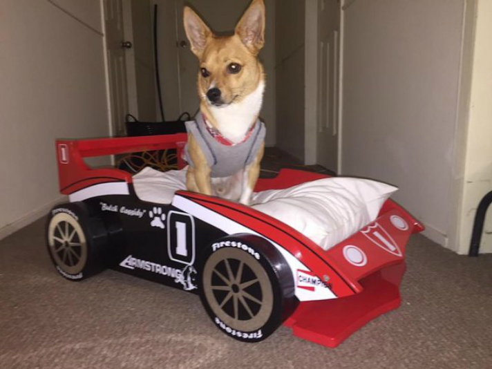 Woman Gets Race Car Beds For Her Grandkids And Granddog - Petcha