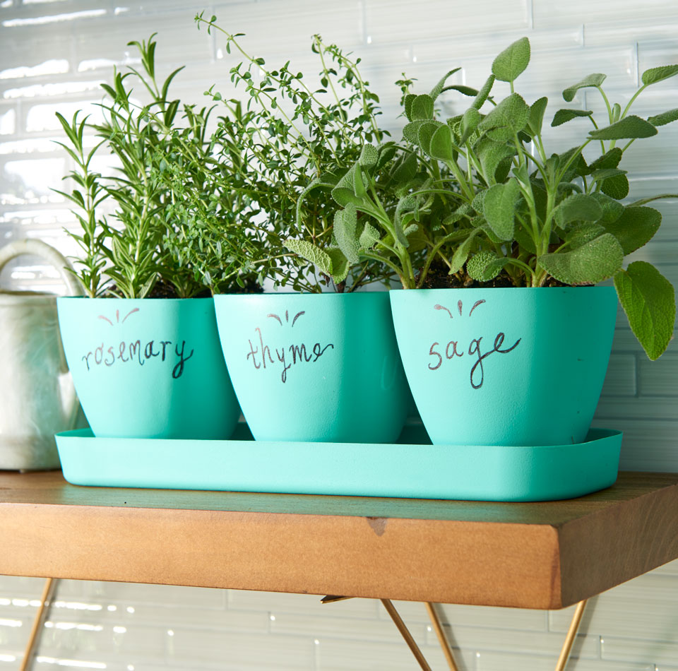 You can plant herbs in virtually any container, so long as it has some type  of drainage and something to protect the surface underneath, such as a  saucer or