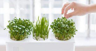 9 Best Indoor Herb Garden Ideas for 2018 - Indoor Gardens for Growing Herbs