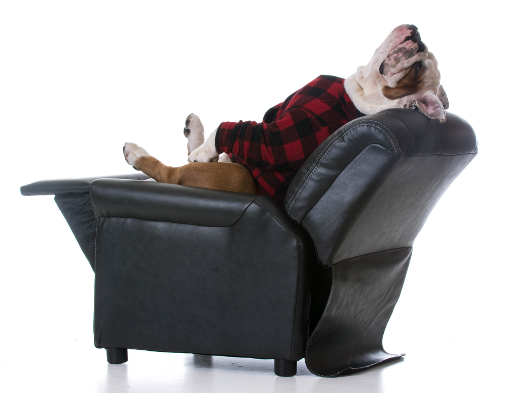 Dog-tired and relaxing on a small recliner.