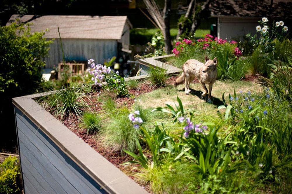 Advantages of a green roof 12 advantages of a green roof