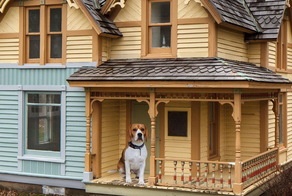 House-ideas-for-mans-best-friend-3 house-ideas for man's best friend