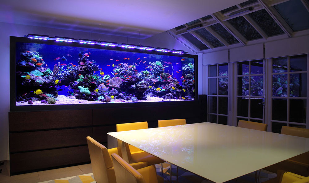 Change the look of your room with this aquarium tank 4 Change the look of your room with these aquarium tanks