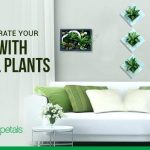 Decorate your home with natural foliage