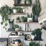 How to integrate plants in an apartment