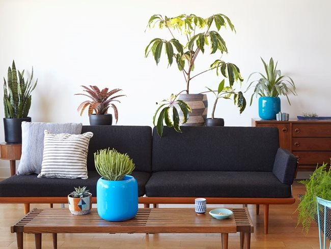 Why Modern Living Vertical Wall Gardens Are The Next Big Interior Design Trend Of 2019